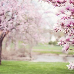 Смена сезонов: как не провести весенние деньки с градусником под мышкой