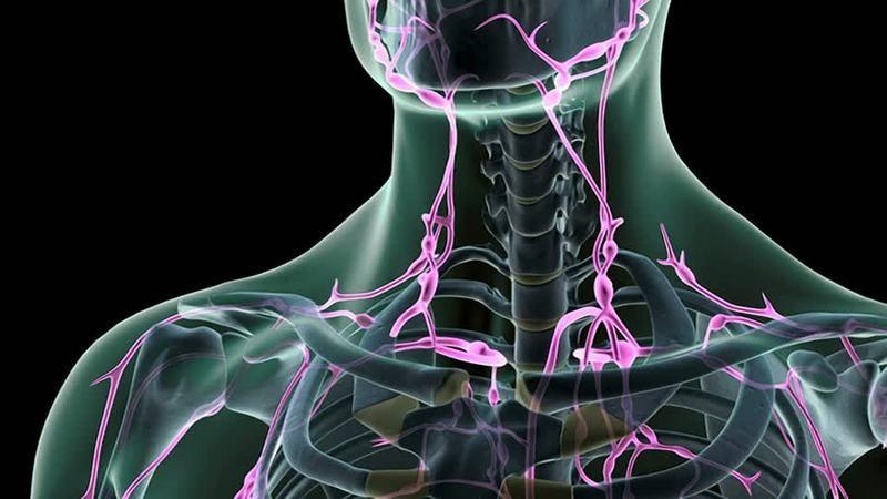 Лимфатическая система: венецианские каналы внутри организма